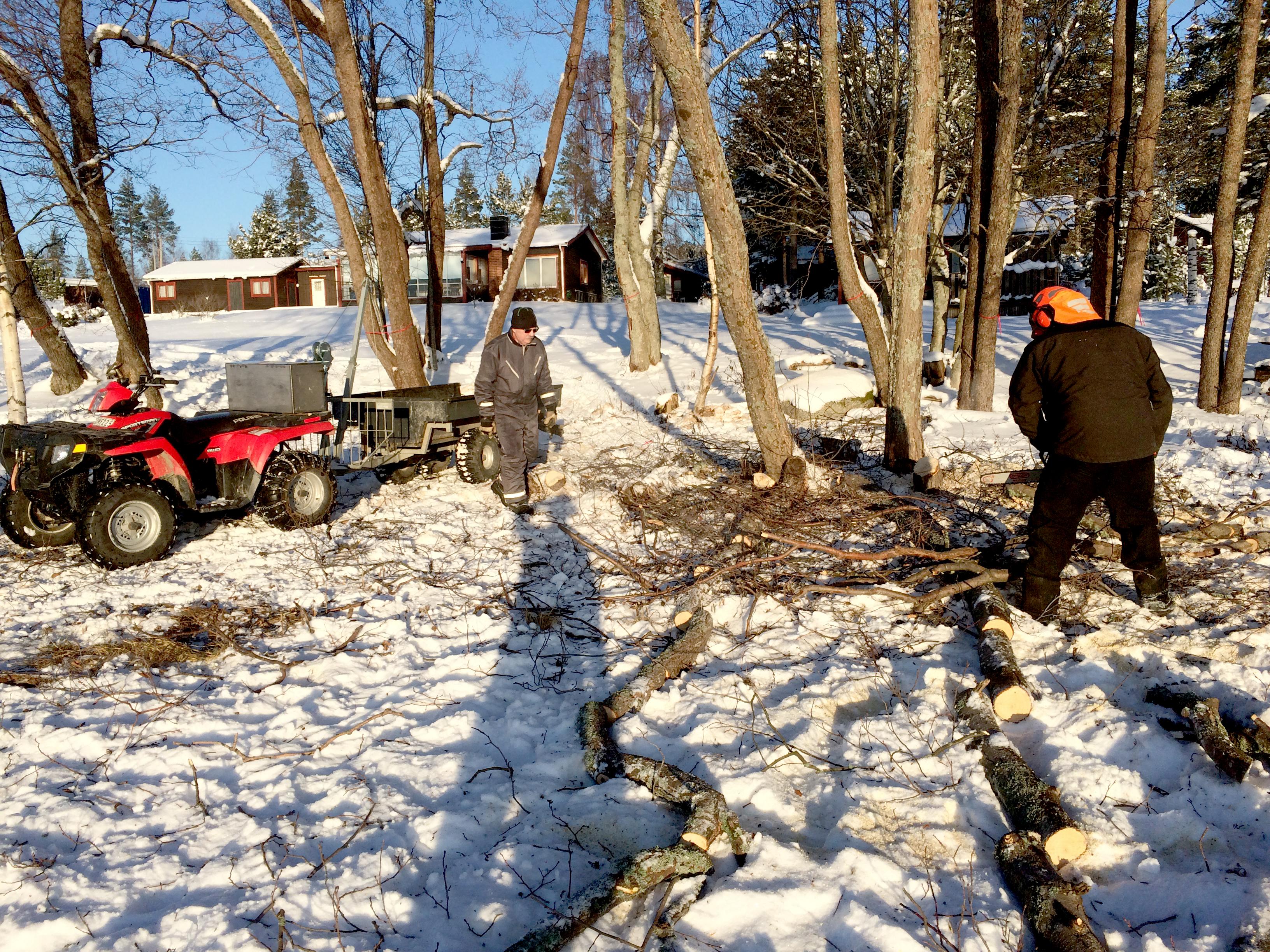 Högsäsong för trädfällning, MIK ALL Service i Örnsköldsvik