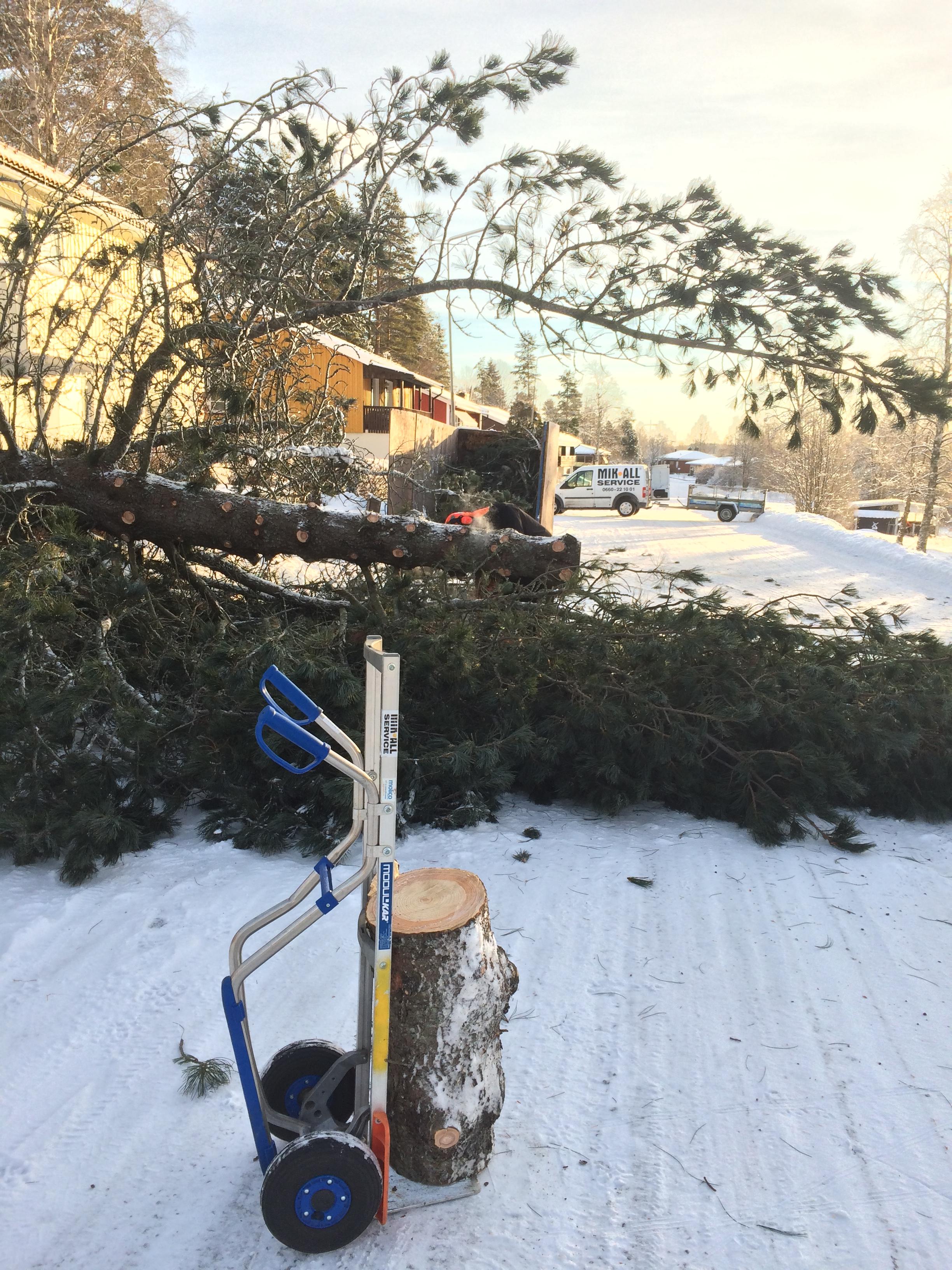Trädfällning, MIK ALL Service AB - Örnsköldsvi, Övik